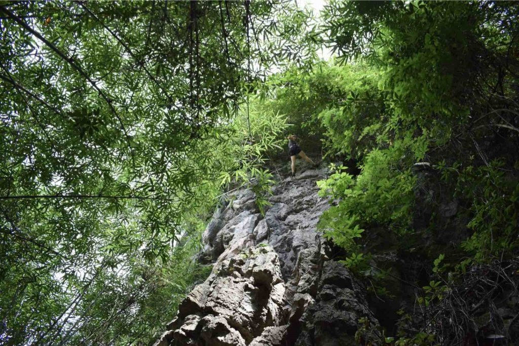 Bamboo-and-rock-at-swiss-cheese-crag
