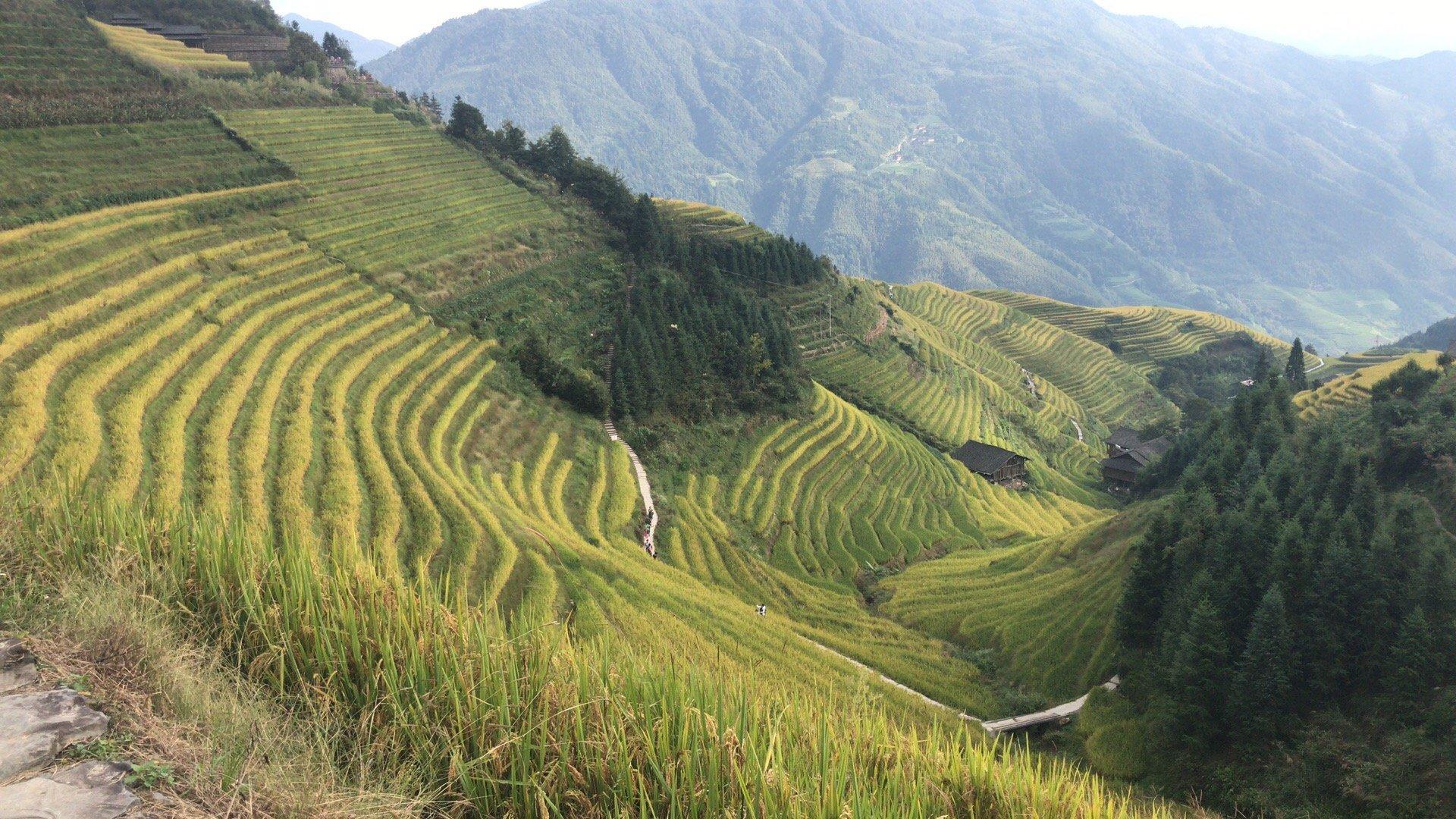 longsheng-rice-terrace-trip-1