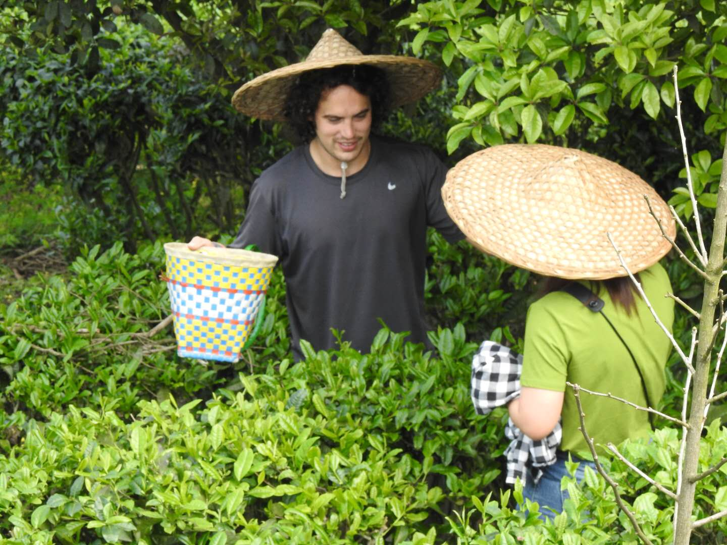 guests-at-the-seven-star-tea-plantation