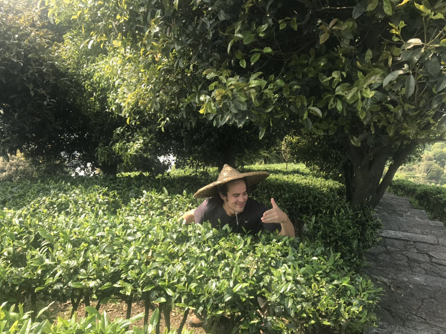 international-students-picking-tea